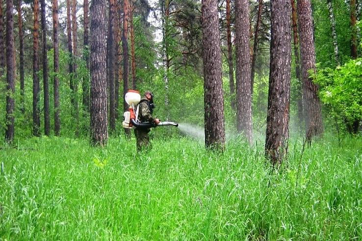 Обработка от клещей лесных массивов в Кунгуре
